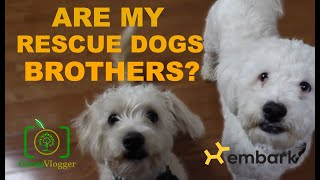Embark DNA Test Results for Rescues | Are my dogs related? - Professional Genealogist Reacts VLOG#49