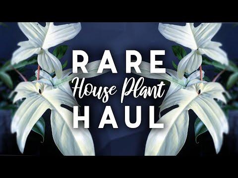 Rare Plant Haul!   7 New Rare Houseplants!   2019
