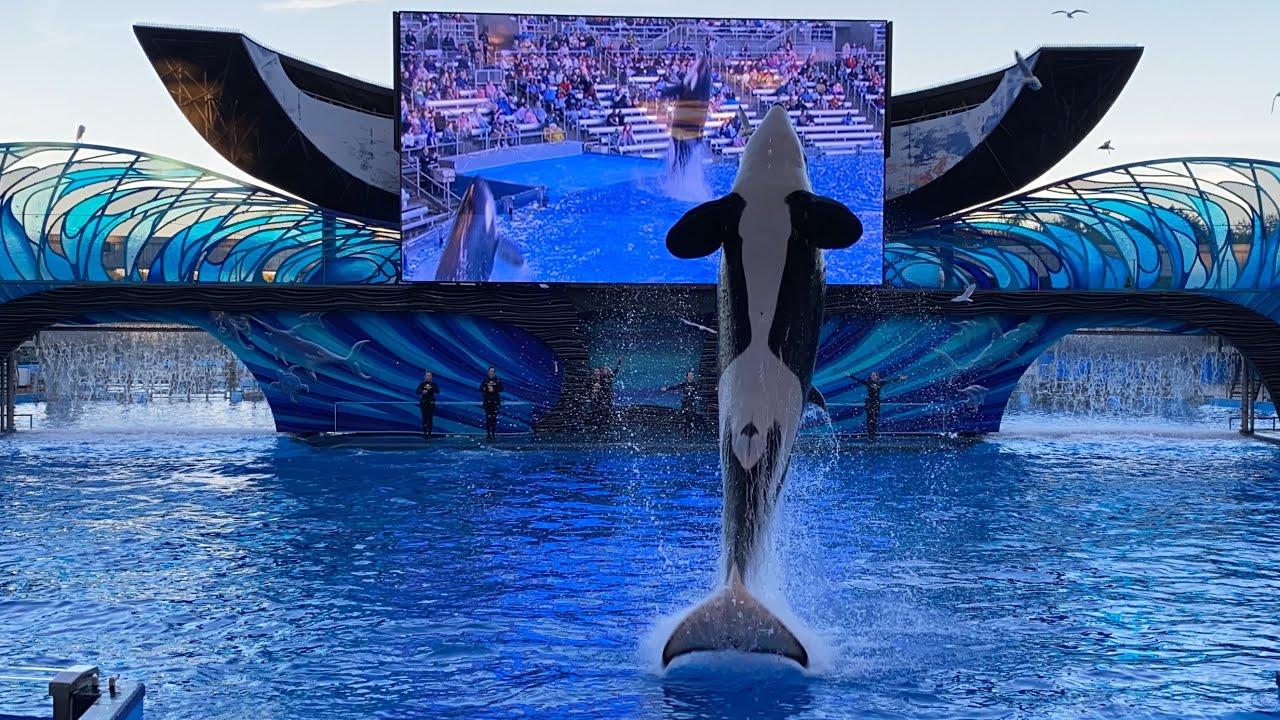 Download NEW SHOW - Orca Encounter A Killer Whale Experience | SeaWorld Orlando