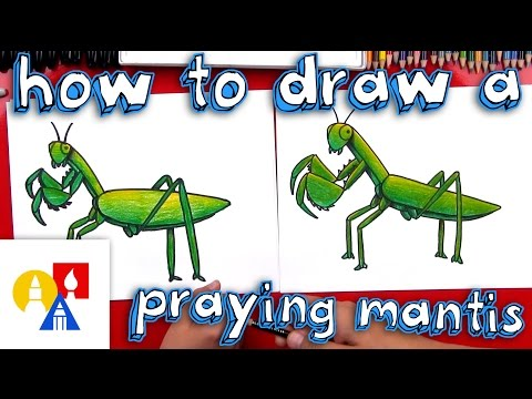 How To Draw A Praying Mantis Youtube