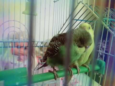 my love birds!! died :(