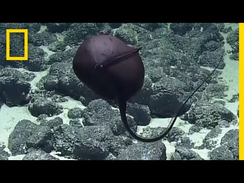 Scientists' Hilarious Reaction to Bizarre Deep-Sea Fish | National Geographic