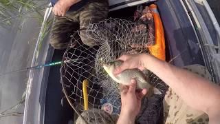Рыбалка на озере Червоное. Караси в камышах.