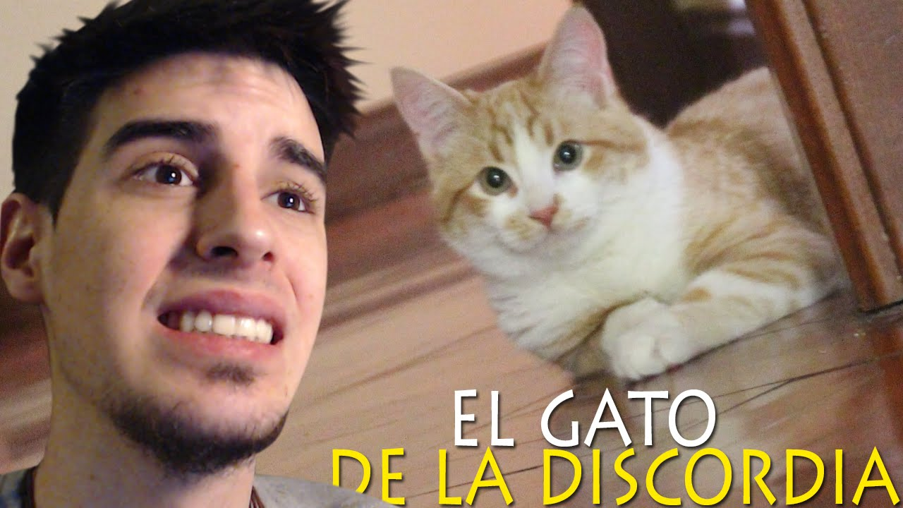 EL GATO DE LA DISCORDIA - YouTube