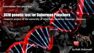 Dcm Genetic Test For Doberman Pinschers