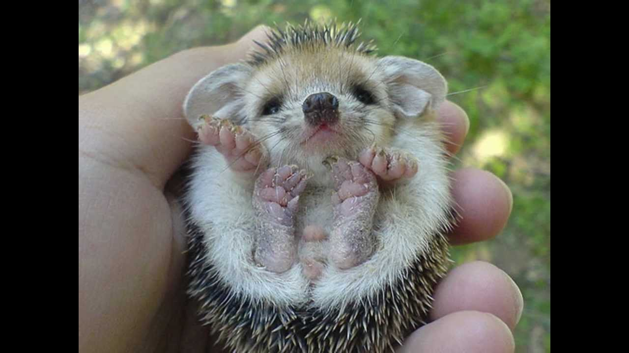 Cute baby animals pictures - YouTube