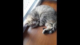 Кошки смешные картинки