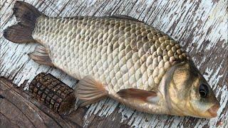 Рыбалка на фидер | ловля на фидер крупного карася | фидерная рыбалка на карася |как ловить на фидер