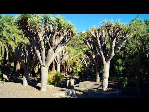 Viera y Clavijo Canarian Botanical Garden - Gran Canaria Las Palmas.