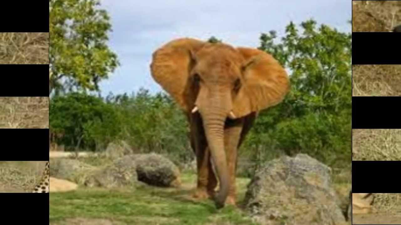 Afrikos gyvunai