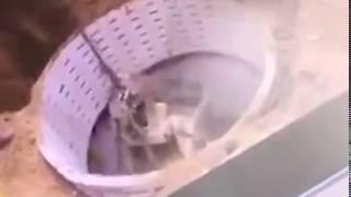 Horrifying moment collapsed cesspool fatally drags worker inside