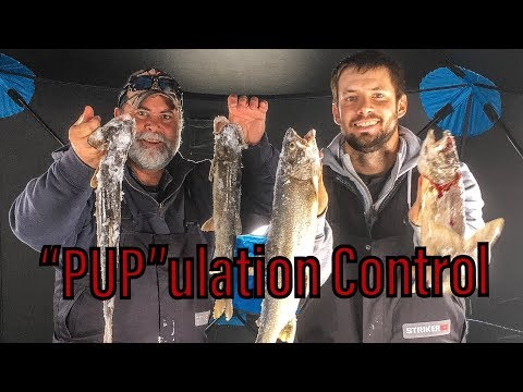 """PUP""ulation Control! - Flaming Gorge Ice Fishing"