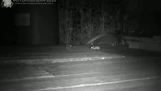 ID1600/Висимский заповедник/Другие виды животных/Полёвка и мышь