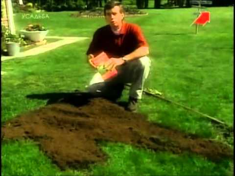 видео: Как создать идеальный газон