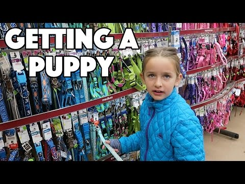 VLOGMAS Day 1: Getting A Puppy For Christmas