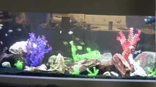 180 Gallon Freshwater Aquarium - Led Lights Finally Finished