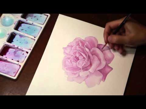 Drawing a rose watercolor.