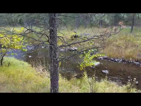 French Creek Horse Camp Black Hills South Dakota