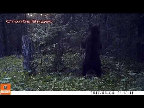 Танцы с медведями