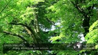 Relaxing Nature Scene - Wind Blowing through Tree Leaves - Zenitude Experience