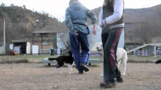 Puppy Class - Lesson 3 (part 2) - Kalhy 5 Month - Pee-trick, Working With Distraction, Agility Stuff