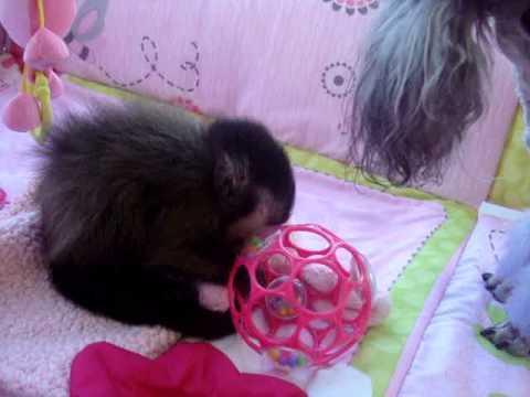 Baby Monkey Nala Kisses Our Puppy Youtube