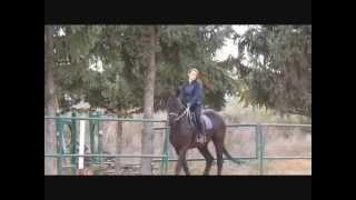 Beautiful girl riding horses