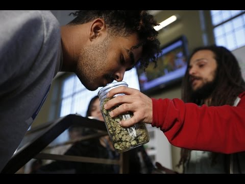 Price of Marijuana Crashing in Colorado