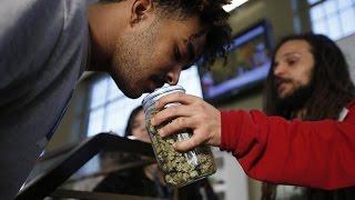 Price of Marijuana Crashing in Colorado