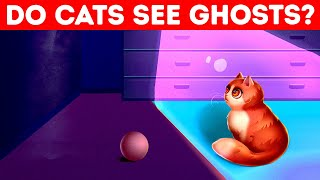 Do Cats See Ghosts? 🙀 Quiz To Learn 10 Cool Cat Facts!