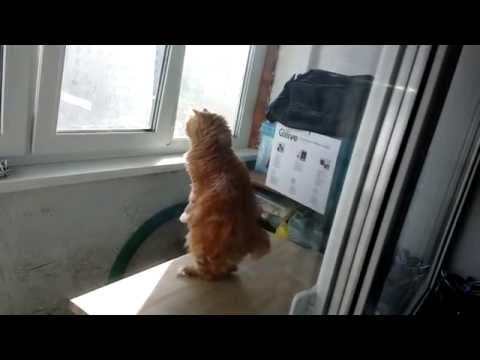 Cat Pretends To Be A Suricate & It's Awesome!