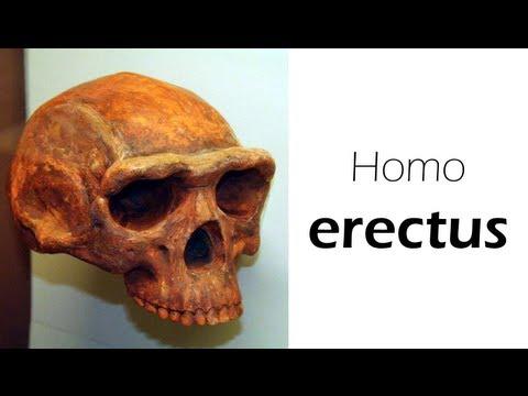 evolution radiometric dating