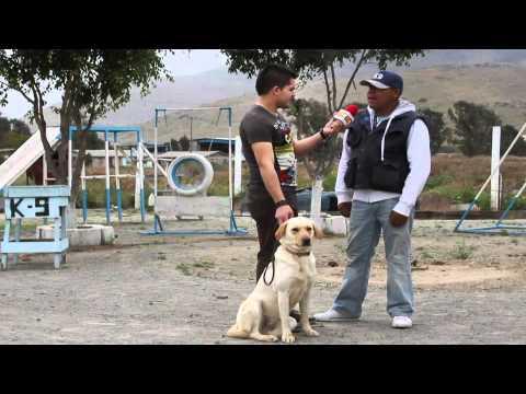 Academia Canina k9  Presente en el programa de TV El Sitio