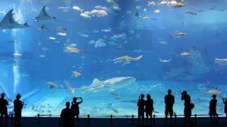 Kuroshio Sea - 2nd largest aquarium tank in the world - (Please Don