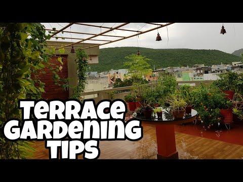 మిద్దె తోట ఎలా మొదలు పెట్టాలి?How to start a TERRACE GARDEN?#terracegardening #middethota #tips
