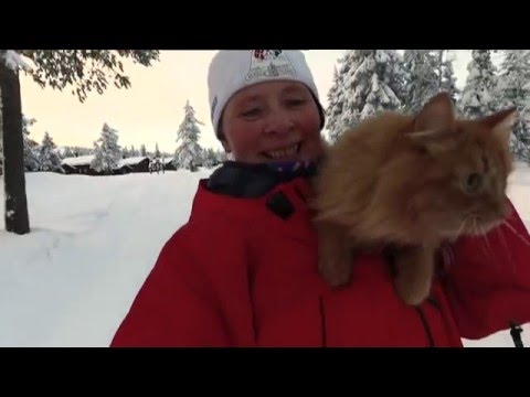 Jesper the cat on a skiing trip in Norway 022016