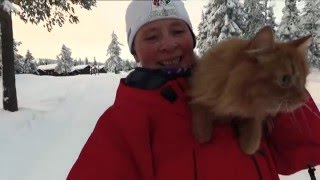 Jesper the cat on a skiing trip in Norway 02/2016