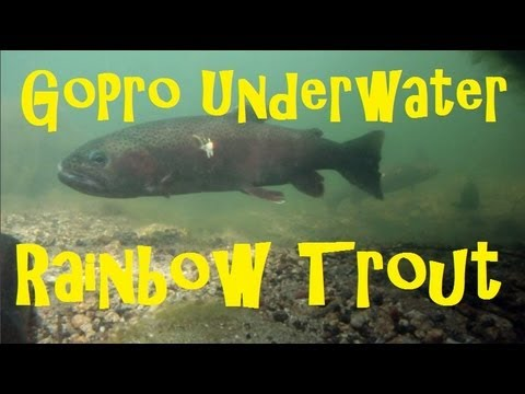 BEST Underwater Trout Fishing Video On GoPro With Spawning Rainbow Trout