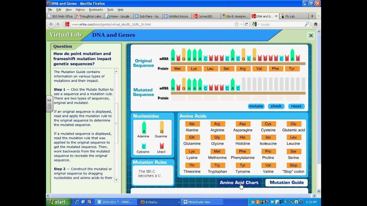 worksheet. Dna And Genes Worksheet Answers. Grass Fedjp ...