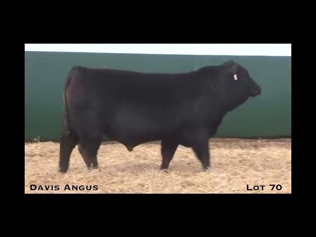 Davis Angus Lot 70