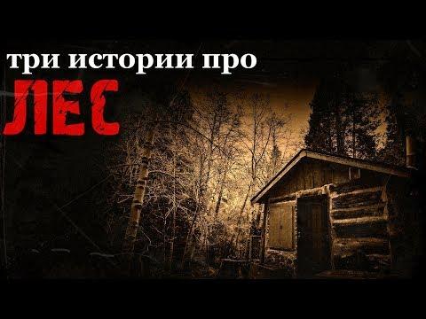 Истории на ночь (3в1): 1.Случай на зимовке, 2.Гостеприимный лес, 3.Старичок-боровичок