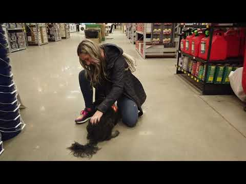 9 Month Old Hungarian Puli | Best Hungarian Puli Training | Off Leash K9 | Board & Train | Oklahoma