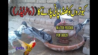 how to make bird water feeder at home for free
