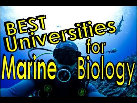 Best Universities for Marine Biology
