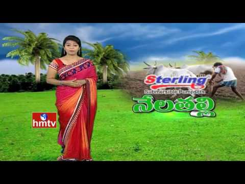 Organic Farming | A Success Story Of Warangal Farmers | Nela Talli | HMTV
