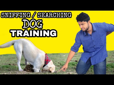 Train Your Dog Basic Sniffing || Apne dog ko search karna sikhaye ||