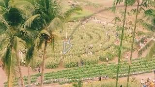 Huge Sunflower Farm @ Tupi, South Cotabato