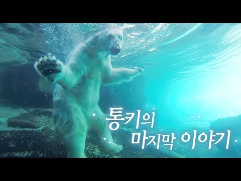 The final chapter of Korea's only polar bear, Tongki