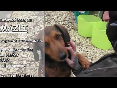 Mentor4dogs- MÀZLI