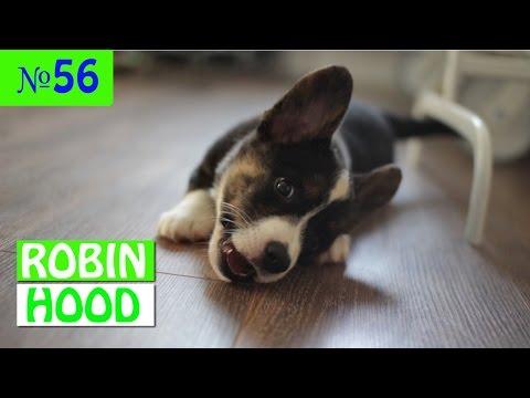 ПРИКОЛЫ 2017 с животными. Смешные Коты, Собаки, Попугаи // Funny Dogs Cats Compilation. Март №56